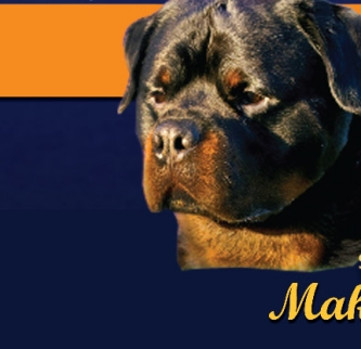 CLICK HERE TO VISIT SIERRA GOLD ROTTWEILERS WEBSITE!